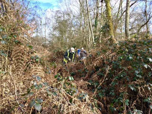 Puttenham Common path clearance - before